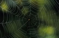 Exploring mechanics of spider silk to design materials with high strength and low density